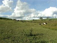 Fazenda 79 alq. na Rodovia com 60 alq. cana