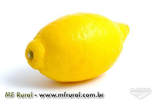 Limão Siciliano ( O Limão mais raro do mundo!)