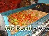 Máquinas para Beneficiamento de Frutas e Legumes em geral