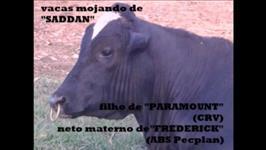 REBANHO LEITEIRO SELECIONADO