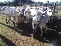 Fazenda 2000 hectares