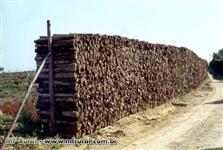 Lenha de eucalipto para caldeiras e fornalhas