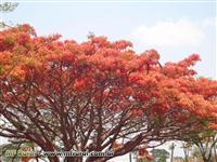 Mudas nativas da Mata Atlântica para reflorestamento