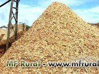 Comercio de cavaco de pinus,eucalipto e serragens para biomassa