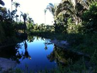 Fazenda Araguaína - TO