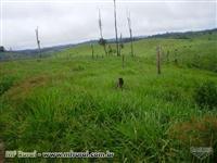 Fazenda em Uruará - PA