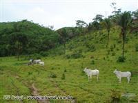 Fazenda em Niquelandia - GO 987 hectares