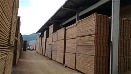 Vendo madeiras de pinis e eucalipto estoque de 40000 m3