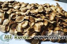 Sementes de MOGNO-AFRICANO - Khaya senegalensis