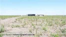 Fazenda para arrendar na região de Bom Jesus - PI
