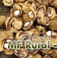 Biomassa Casca do licuri Semelhante  a casca do Babaçu