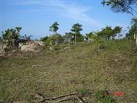 Arrendo área para plantio de eucalipto na  bahia