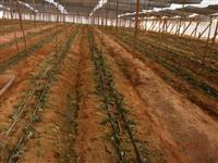 TELA SOMBRITE: Tela Agrícola - 50%