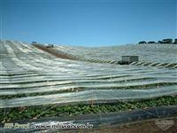 Filme Plástico Agricolas para cobertura de Estufa – Filme Mulchin - CULTIVO PROTEGIDO