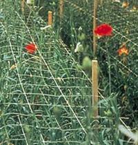 Tela Agrícola para Tutoramento de Planta:  Rede para Tutoramento  Fio para Condução de Planta