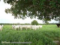 Fazenda pra agricultura/pecuária em Miracema próximo a Palmas