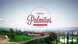 VENDO INDUSTRIA DE PALMITO