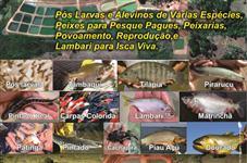 Peixe Vivo (Pintado) em Goiânia, Anápolis, Brasília, Uberlandia Abate e Alevinos