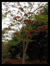 Vendo Mudas de Árvores Nativas