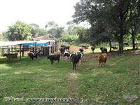 Sitio 8 Alqueires em Marechal Candido Rondon, Pr