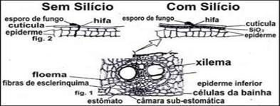 SILÍCIO LIQUIDO 25,00 COM POTÁSSIO 15,00%