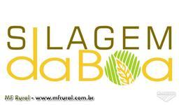 SILAGEM DABOA - SORGO