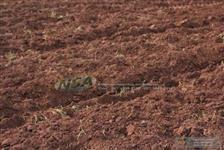 Fazenda de 1460 hectares em Mato Grosso