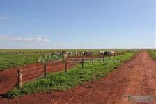 Fazenda para soja no Mato Grosso