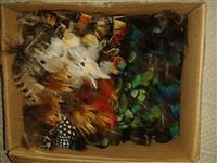 Disponível penas de pavão (azul) e faisões (Lady, dourado, canário)
