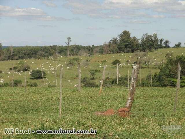 Fazenda a venda na região de Bauru