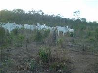 Fazenda Sítio em Natividade Tocantins com 48 hectares