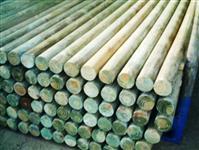 Rolete de Pinus 08cm x 1,30 cm
