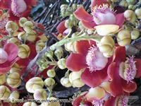 Mudas de Fruteiras Nativas