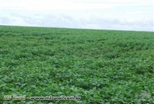 Fazenda 193,6 hectares na região de Rio Verde - GO