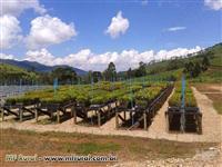 VIVEIRO DE MUDAS FLORESTAIS - Projetos e Serviços Florestais e Ambientais