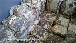 Substrato de cogumelos