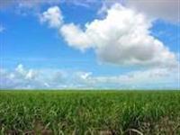 Fazenda com1000 ha em Bom Jesus - PI.