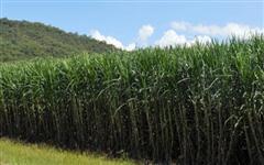 Fazenda na região de Ribeirão Preto com arrendamento em cana