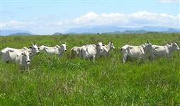 Vendo fazenda em atividade pecuária localizada a 200 km de São Paulo