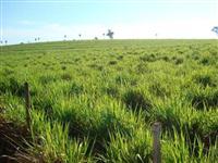 Vendo fazenda entre Gália/SP e Bauru/SP topografia plana cana e pecuaria