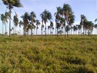 Vendo fazenda na região de Aparecida do Taboado/MS e Paranaíba/MS em pecuária