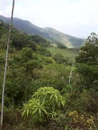 Vendo sítio na serra de Petrópolis/RJ com casas e água mineral