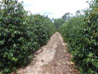 Vendo sítio em Garça/SP com café irrigado e poço artesiano perto da cidade