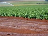 Vendo fazenda na região de Buri/SP ,com solo para cultura mista e pastagem
