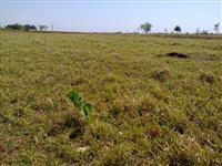 Vendo fazenda completa na região de Itapira/SP para pecuária e plantio