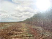 Vendo fazenda entre Ribeirão Preto e São Carlos com cana