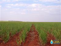 Vendo fazenda na região de Rincao / SP com arrendamento de cana