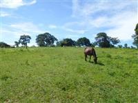 Vendo fazenda em Poxoréo/MT