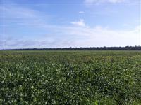 Vendo fazenda para plantio e pecuária em São José do Xingu/MT