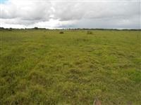 Vendo fazenda localizada a 200 km de Corumba/MS para pecuária